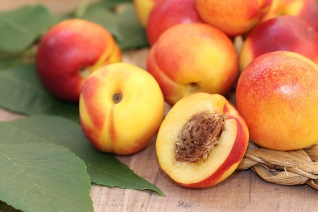 apricot for babies