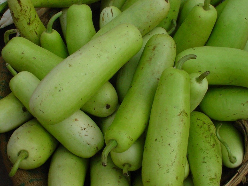 Health benefits of Bottle Gourd for babies