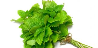health benefits of lemon balm for children