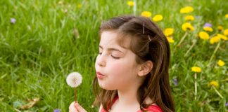 dandelion benefits for infants
