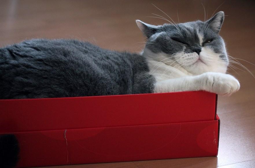 Cat Scratching Zone