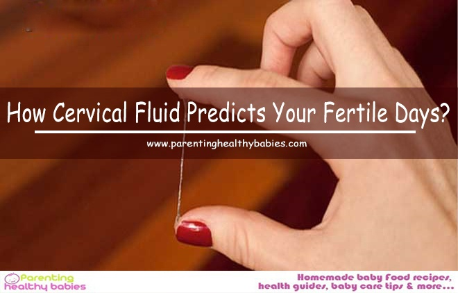 Cervical Fluid Predicts