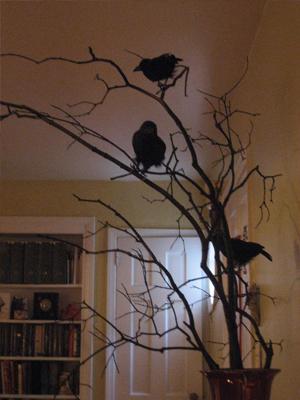 Bird decorating