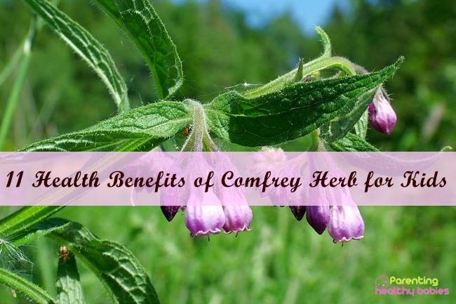 comfrey herb for children