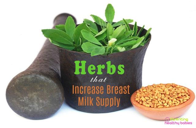 herbs that increase breast milk