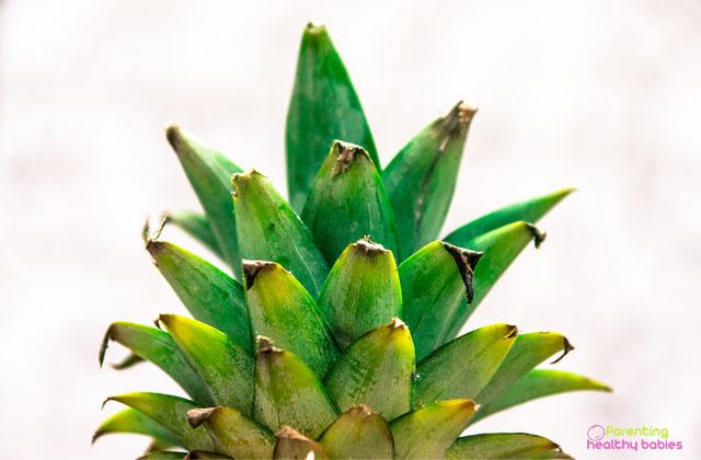 health benefits of pineapple leaves