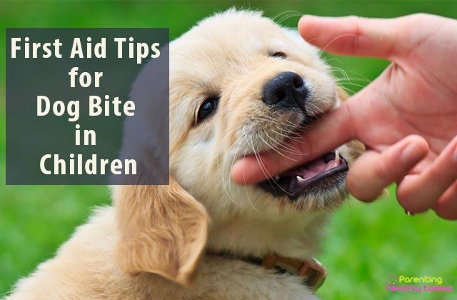 dog bite first aid