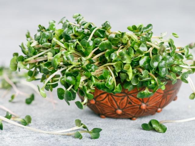 microgreens benefits