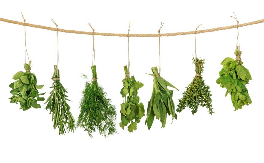 herbs for milk production