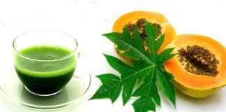 papaya leaves extract for dengue