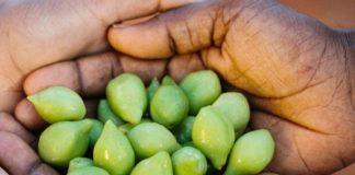 kakadu plums benefits