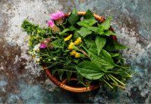herbs in pregnancy