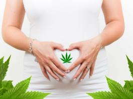 hemp and pregnancy