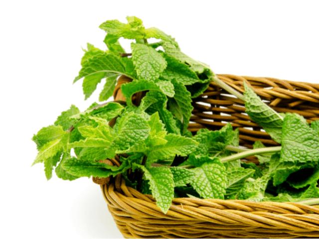 mint leaves uses